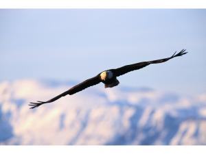 eagle2.png
