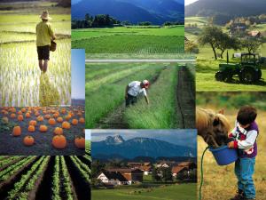 abundant farms