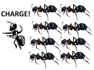 ANT ATTACK