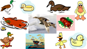 All ducks waddle, and all ducks swm, but not all ducks can fly.