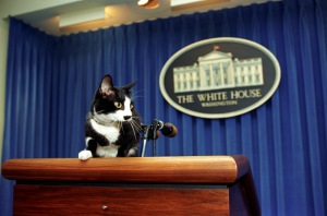 Socks at the podium in the White House Press Briefing Room (By Barbara Kinney - Clinton Presidential Library & Museum)