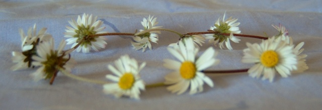 The daisy chain is a pretty thing children love, but its method of construction features flower stem after flower stem passing through flower stem after flower stem until flower has been pointlessly damaged for the sake of another. (from here)